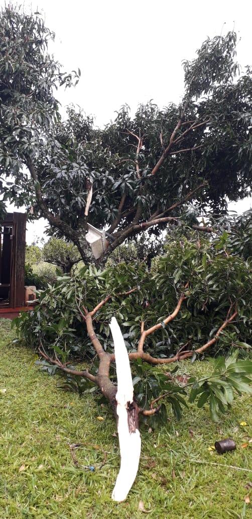 San Vicente :  Mini tornado con fuertes ráfagas de viento de 90 km por hs azotó a la localidad