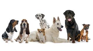 Çocukların duygusal ve sosyal gelişiminde önemli rol oynayan hayvan sevgisinin küçük yaşlardan itibaren aşılanması gerekiyor. hayvan sevgisi ile ilgili özlü sözler,hayvan sevgisi ile ilgili sloganlar,hayvan sevgisi ile ilgili yazı,hayvan sevgisi ile ilgili şiirler,hayvan sevgisi ile ilgili atasözleri,hayvanlarla ilgili komik sözler,sevgi ile ilgili güzel sözler, hayvan sevgisi ile ilgili kompozisyon