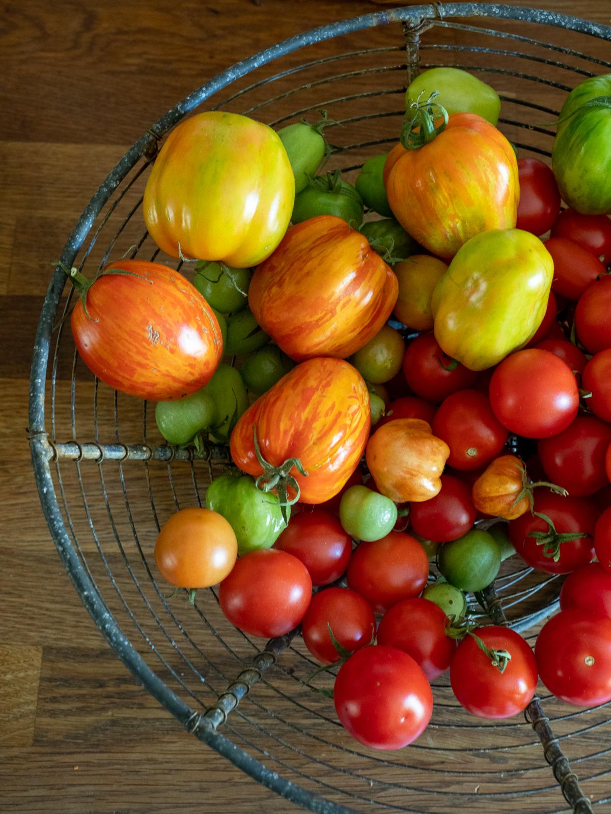 tomaattien kypsyttäminen sisällä