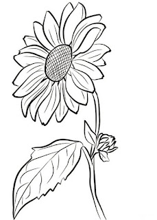 Gambar sketsa bunga untuk mewarnai