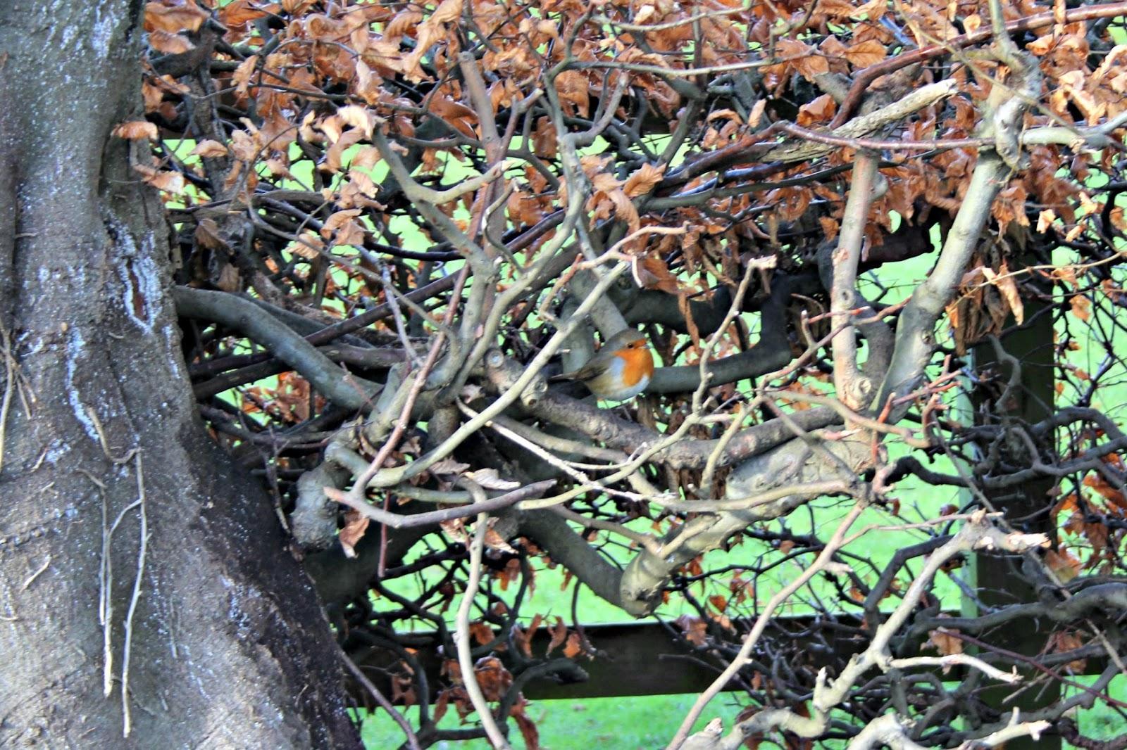 Castle Barnard Sensory Garden
