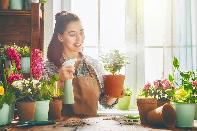 Sfaturi de baza pentru ingrijirea plantelor de apartament