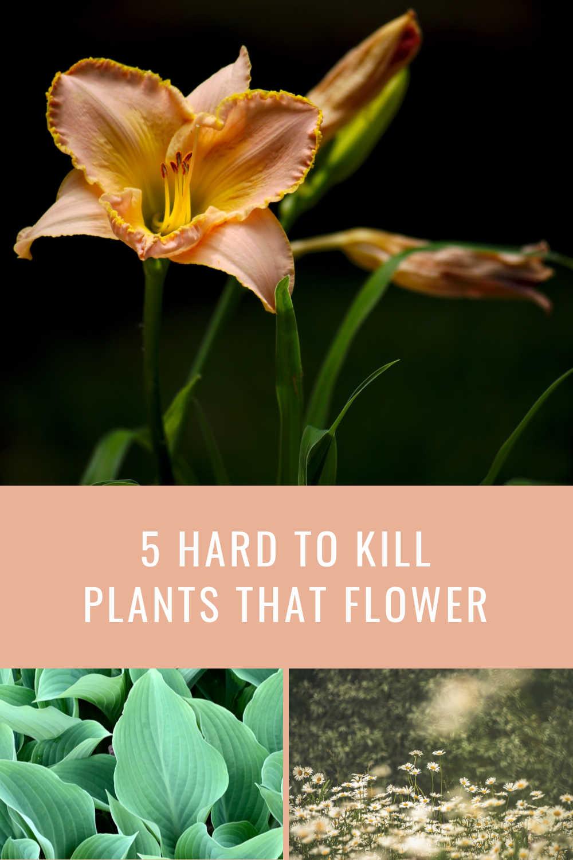 PLANTS THAT FLOWER