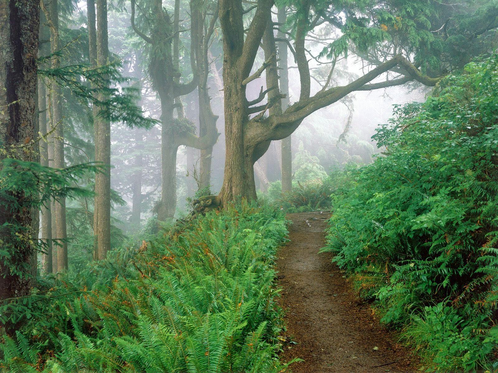 Apakah Anda Tinggal Di Daerah Pegunungan Berikut Tiga Kelebihan