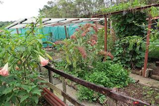 vegetable garden near Santiago de Puriscal