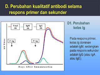 respon tubuh sel memori terhadap penyakit