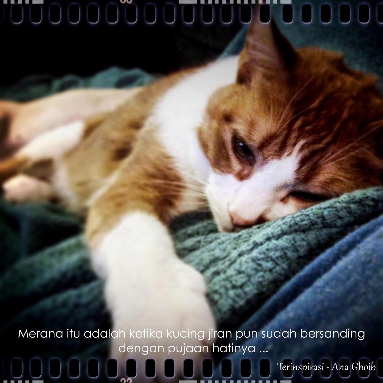 Kucing El Lawak Gila Kucing El