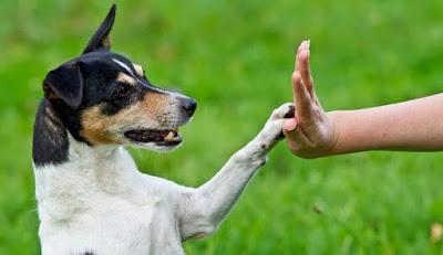 ¿Porque adiestrar mi perro?