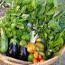 Productores orgánicos ofrecen sus productos cada jueves en Osorno