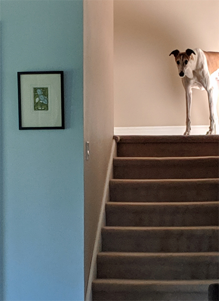 image of Dudley the Greyhound standing at the top of the stairs, peering down at me