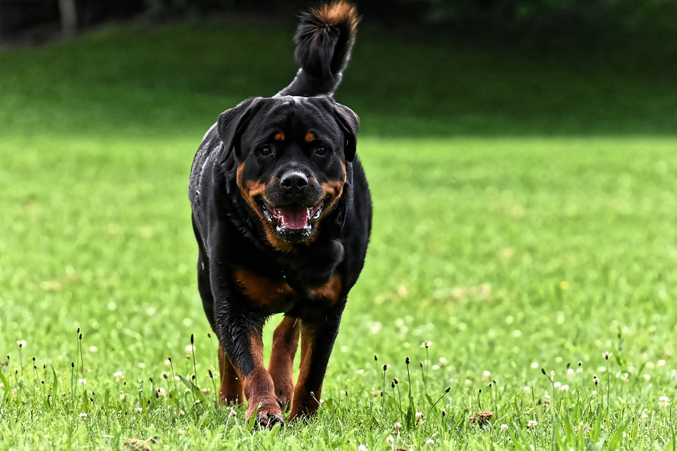 Dog Breeds For Families In India