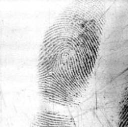 Fingerprint Detection Experiment