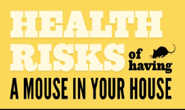 Health Risks of Having a Mouse in Your House #infographic
