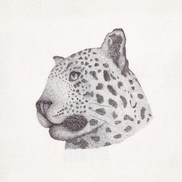09-Leopard-Renee-www-designstack-co