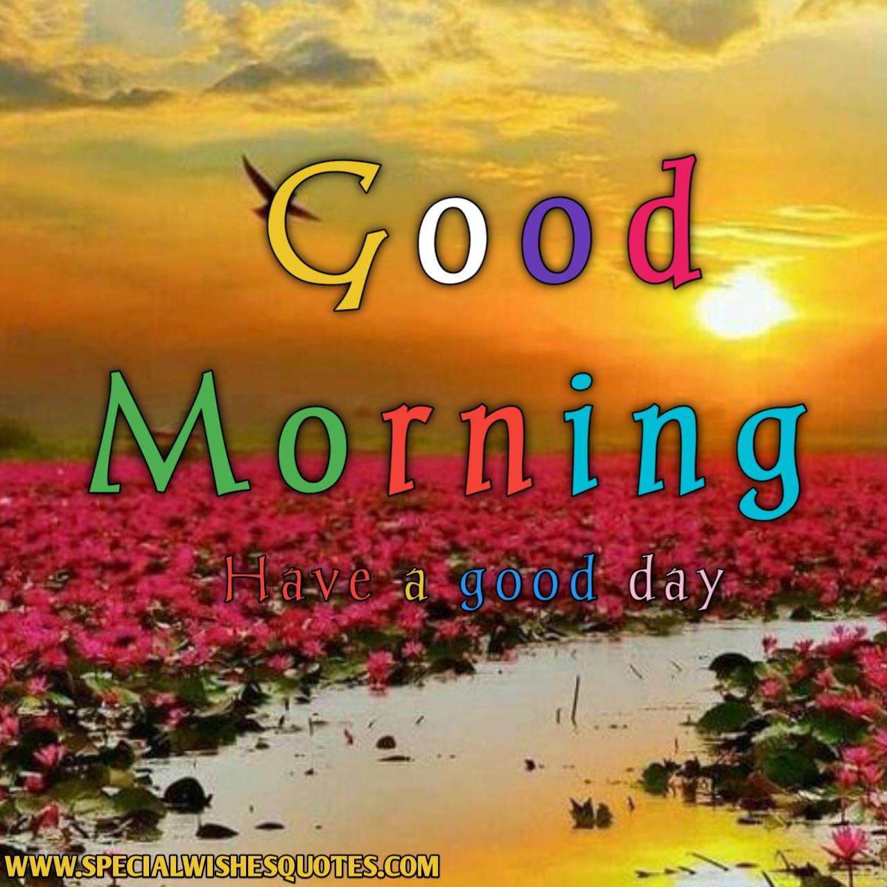 good morning rose