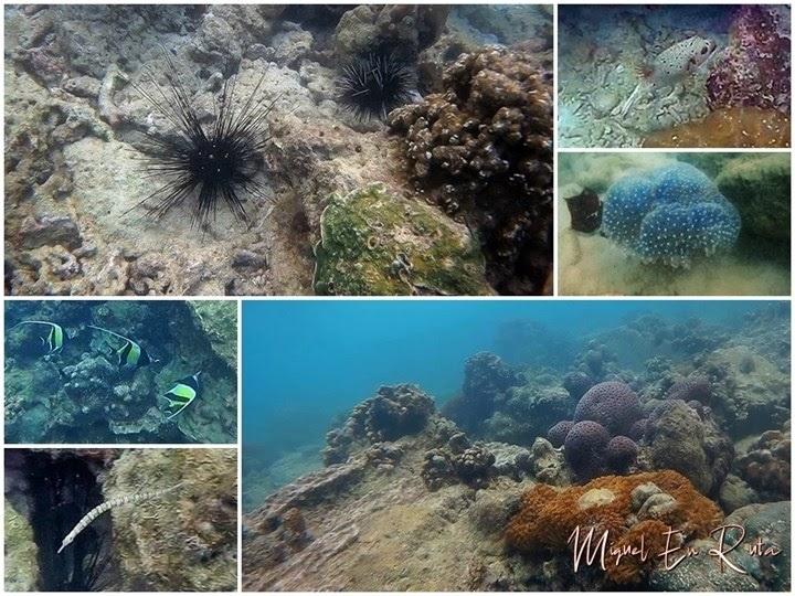 Fondos-marinos-Monkey-Beach-Tailandia