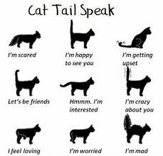 Firdhananifa 16 Perilaku Kucing Yang Perlu Diketahui