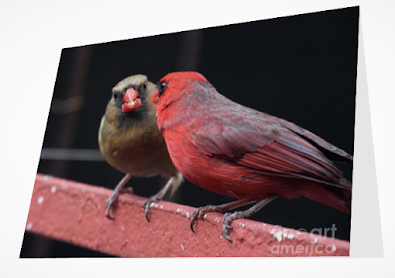 This is a screen shot of a card which I'm selling on Fine Art America. It features a cardinal couple. The male (red) is on the left. The female (brownish) is on the right. They are perched on an orange-colored metal railing and appear to be staring into each others eyes.  Info re this card is @ https://fineartamerica.com/featured/cardinal-love-1-patricia-youngquist.html?product=greeting-card