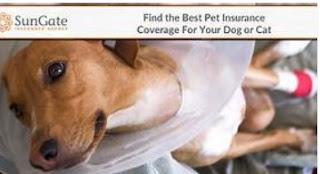 Де знайти кращі страхові провайдери для здоров'я домашніх тварин