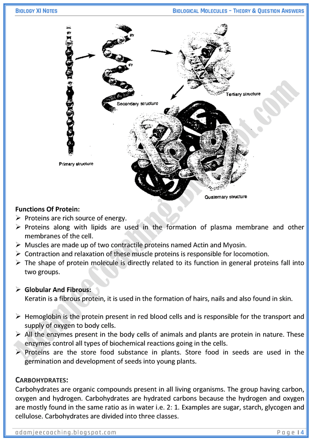 biological-molecules-descriptive-question-answers-biology-11th