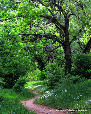 A landscape photograph of a path through the woods and a blurb about meandering.