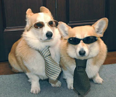 Dogs audition for men in black movie film