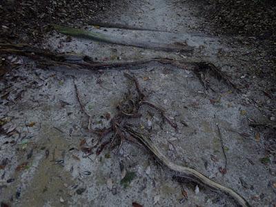 枚方八景 樟葉宮跡の杜