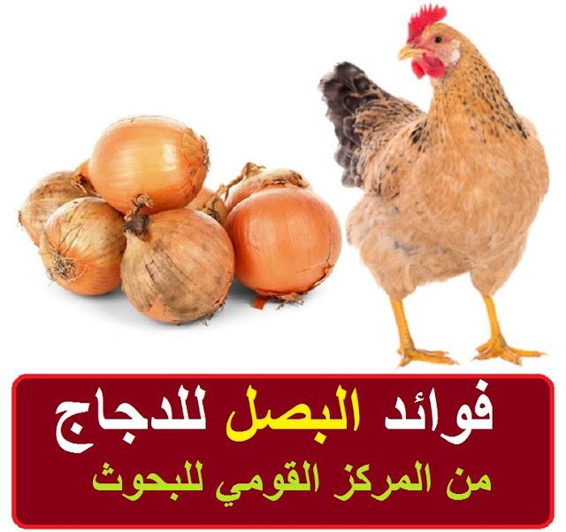 """""""فوائد البصل للدجاج"""" """"فوائد البصل للدجاج البياض"""" """"فوائد البصل للدجاج التسمين"""" """"فوائد بصل للدجاج"""" """"فائدة البصل للدجاج"""" """"فوائد البصل والثوم والليمون للدجاج"""" """"فوائد البصل للدجاج البلدي"""" """"فوائد البصل للدواجن"""" """"فوائد البصل للفراخ"""" """"فوائد البصل للفراخ البيضاء"""" """"فوائد البصل والثوم للدجاج"""" """"فوائد البصل للكتاكيت"""" """"فائدة البصل للدواجن"""" """"فوائد البصل لدجاج التسمين"""" """"فوائد البصل الاخضر للدجاج"""""""