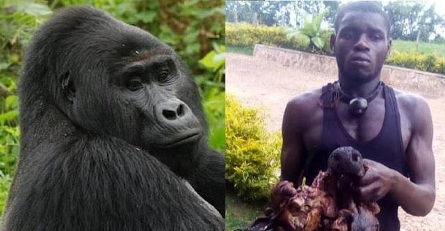Браконьера осудили на 11 лет тюрьмы за убийство редкой гориллы