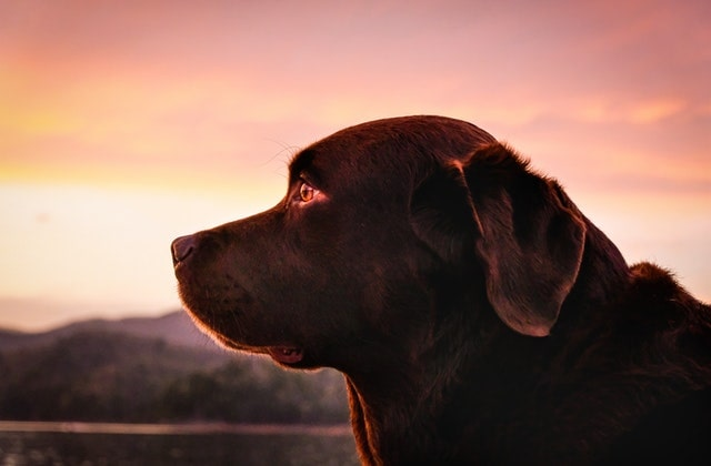 do dogs go to heaven how to memorialize our pets