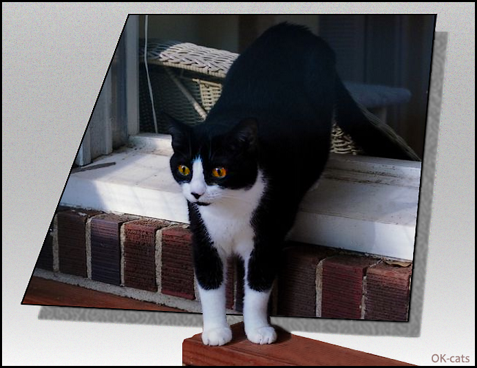 Photoshopped Cat picture • Out Of Bounds effect • Funny Cat mesmerized by something very strange