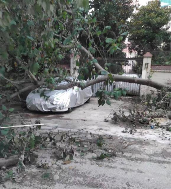 強風で木が車の上に倒れた