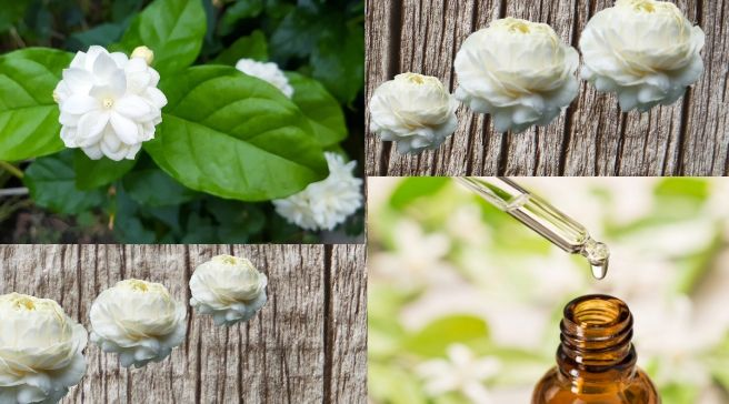 Jasminum sambac care & Cultivation