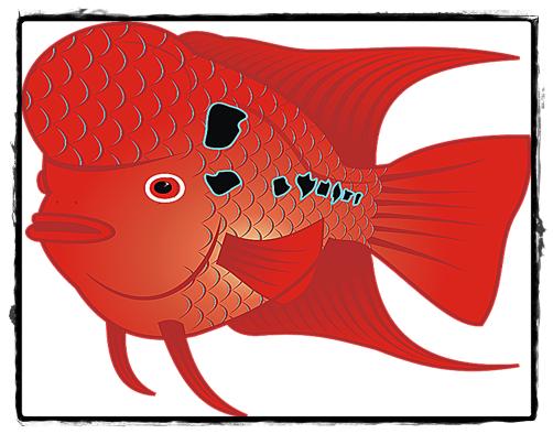 Ciri-ciri Ikan Louhan