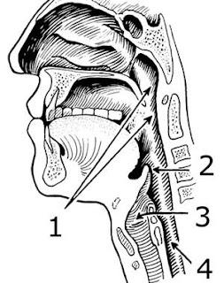 laryngopharyngeal reflux