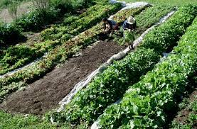 Crop Rotation - Principles and Benefits | Types of Crop Rotation