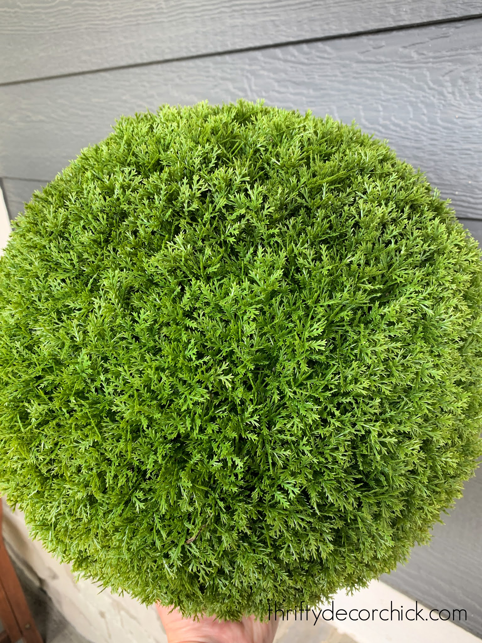 evergreen topiary balls for landscaping