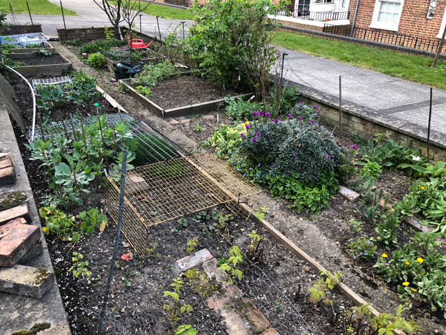 Narrow garden within a low wall, with soil for growing food plants, surrounded by paving.