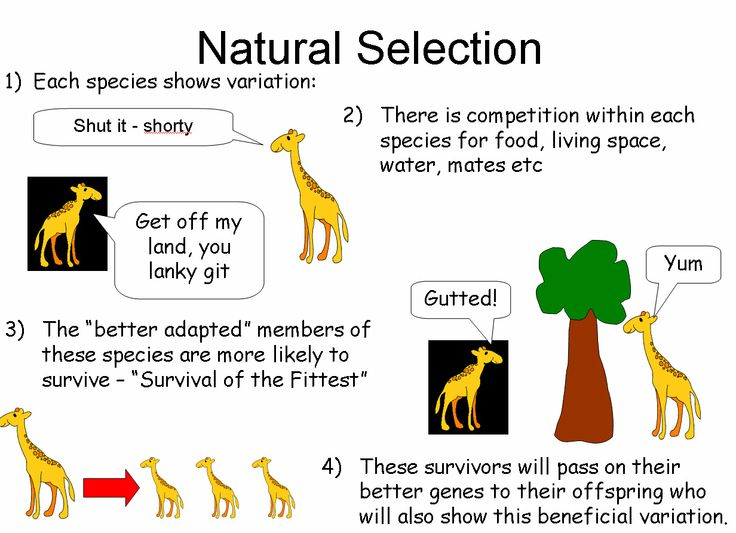 Synonym Natural Selection