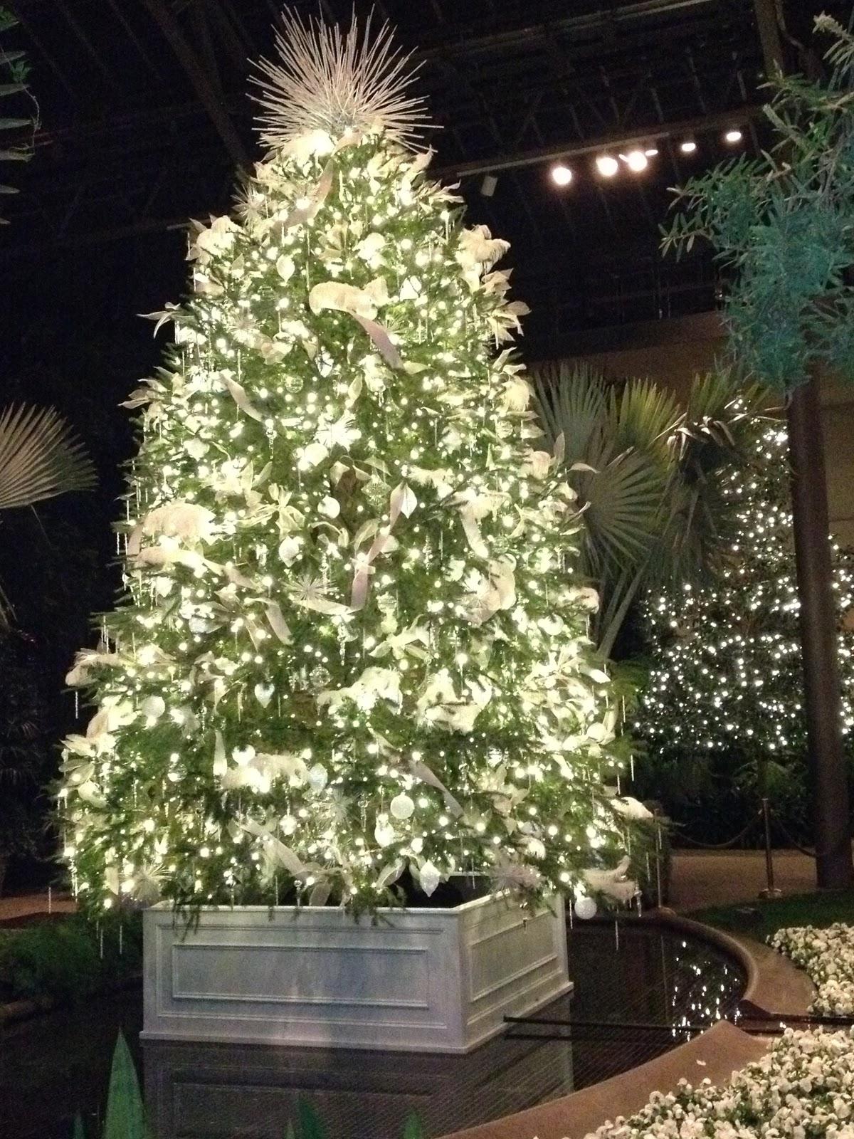 My City Garden: A Longwood Christmas - Trees