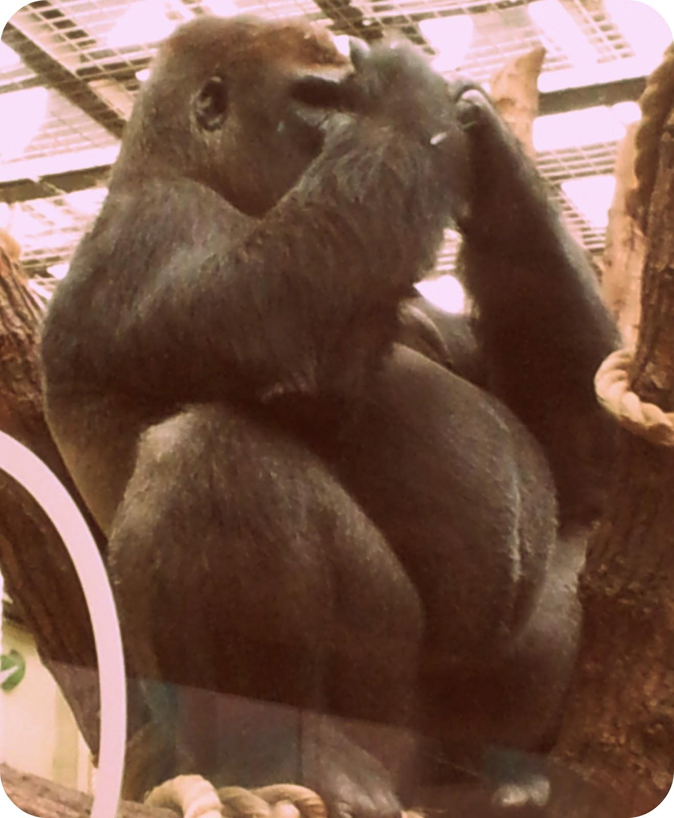 Caption Saturday In London Zoo
