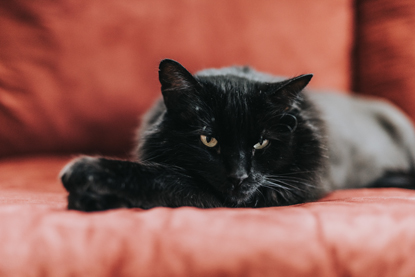 a black cat lying on a red sofa