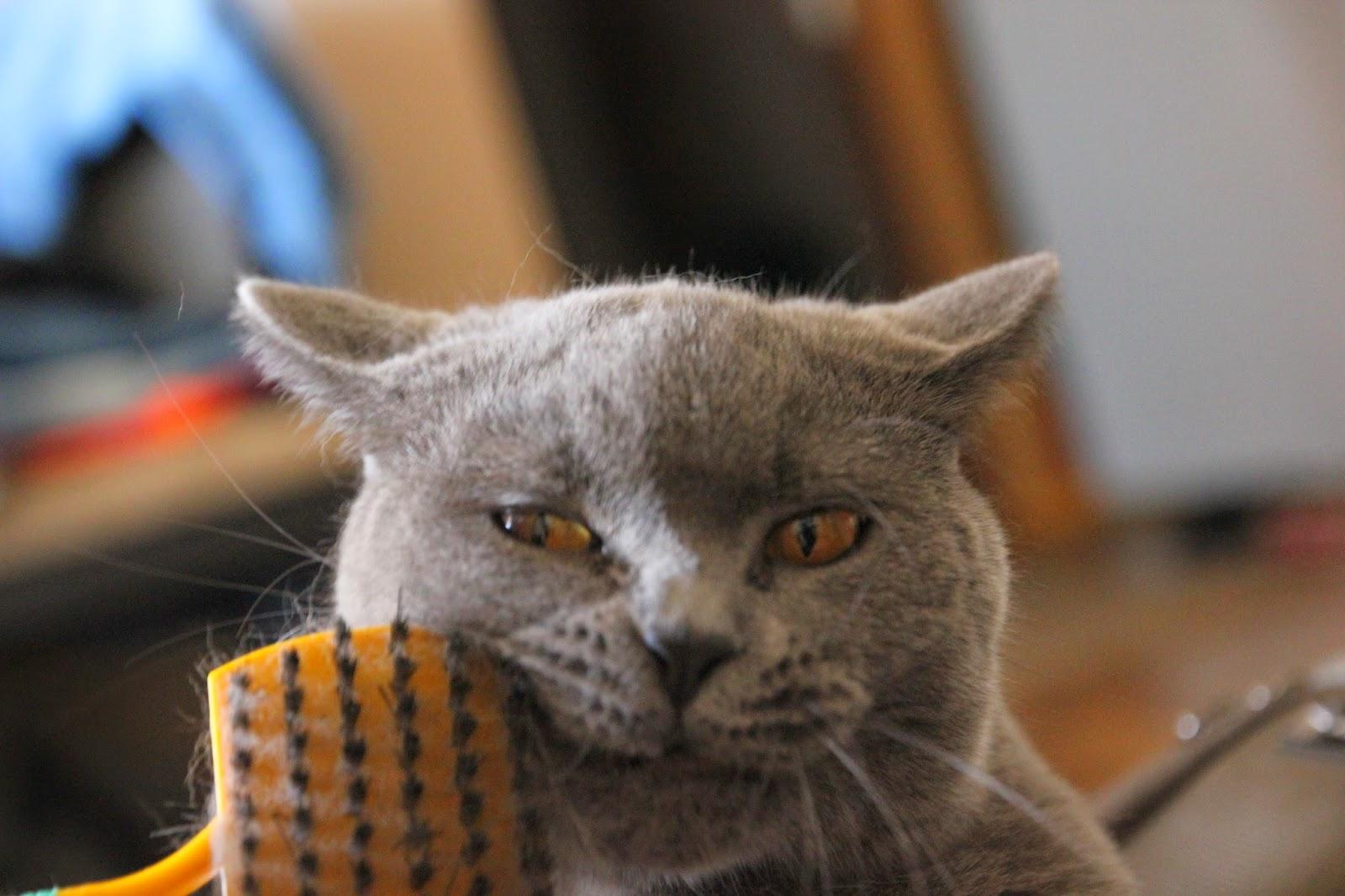 Mój kot Czesław.
