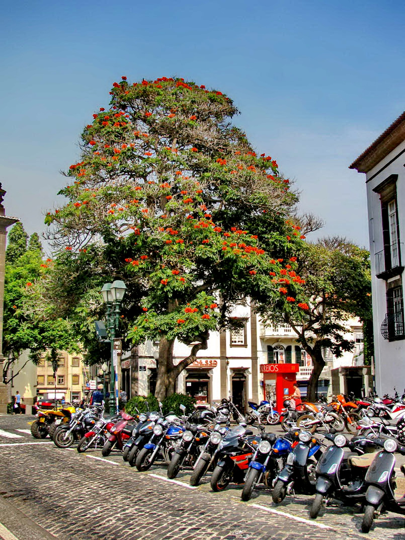 motorbikes and a majestic tree