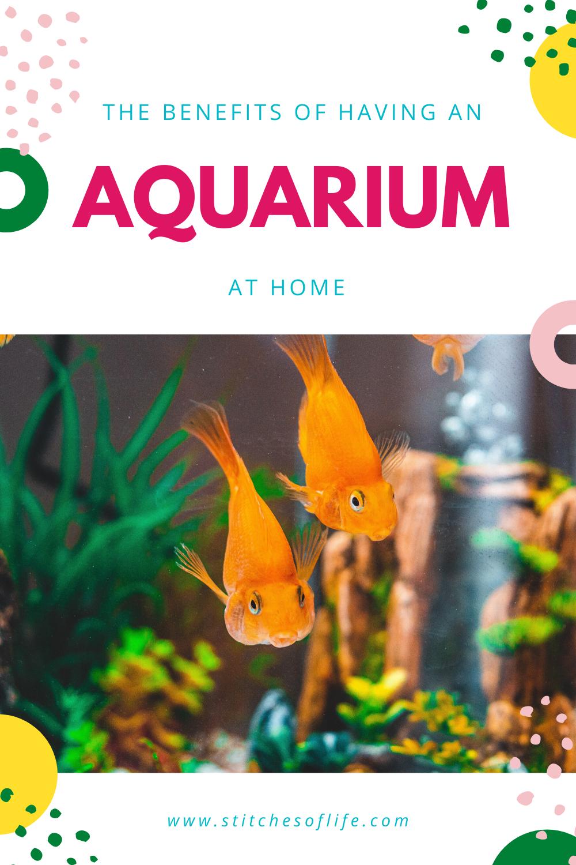 Benefits of an Aquarium