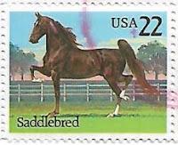 Selo Cavalo Saddlebred
