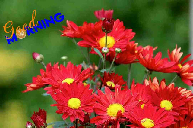 beautiful good morning image red flowers in a nature