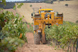Grape harvester: Gregoire G8