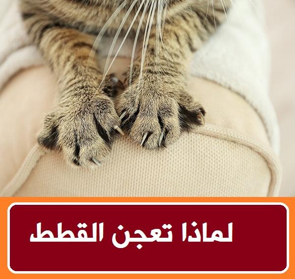 """""""تعجن القطط"""" """"القطط تعجن"""" """"لماذا تعجن القطط"""" """"سبب تعجن القطط"""" """"اسباب تعجن القطط"""" """"لماذا القطط تعجن"""" """"القطط الفطسانة"""" """"القطط الفاطسة"""" """"القطه مبتاكلش"""" """"لماذا تتصرف القطط كانها تعجن"""" """"لماذا تبدو القطط كأنها تعجن"""" """"القطط الميته في المنام"""" """"القطط الميته في الحلم"""" """"القطط الميته بالحلم"""" """"القطط الميته"""" """"القطط الميته بالمنام"""" """"القطة مش بتاكل"""" """"القطه مش راضيه تاكل"""" """"القطة مش بتاكل خالص"""" """"القطه بتاكل"""" """"القطة البتكلم"""""""