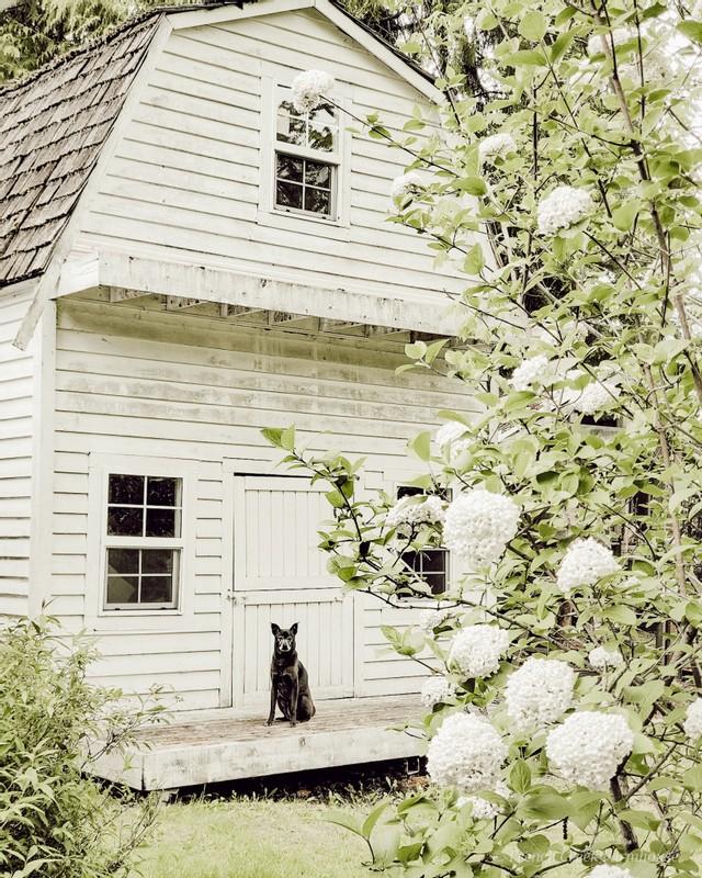Our gambrel style bunkhouse at springtime